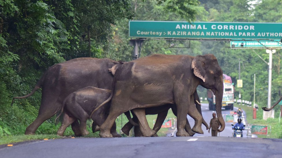 gajah, India, Indonesia
