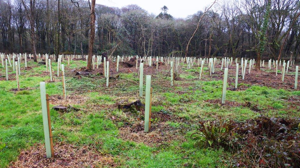Volonterski pristup u sađenju drveća nije dao rezultat u Velikoj Britaniji