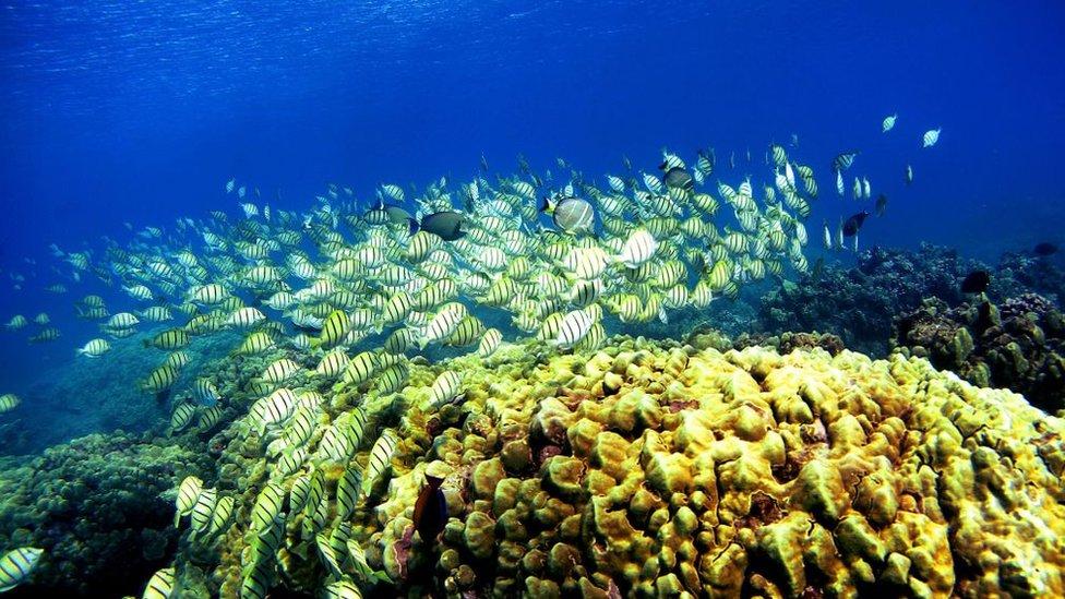 Arrecifes de coral.