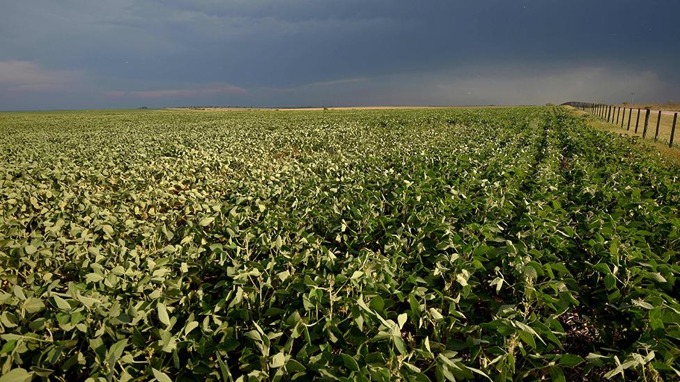 Un campo con cultivos de soja en Entre Ríos, Argentina