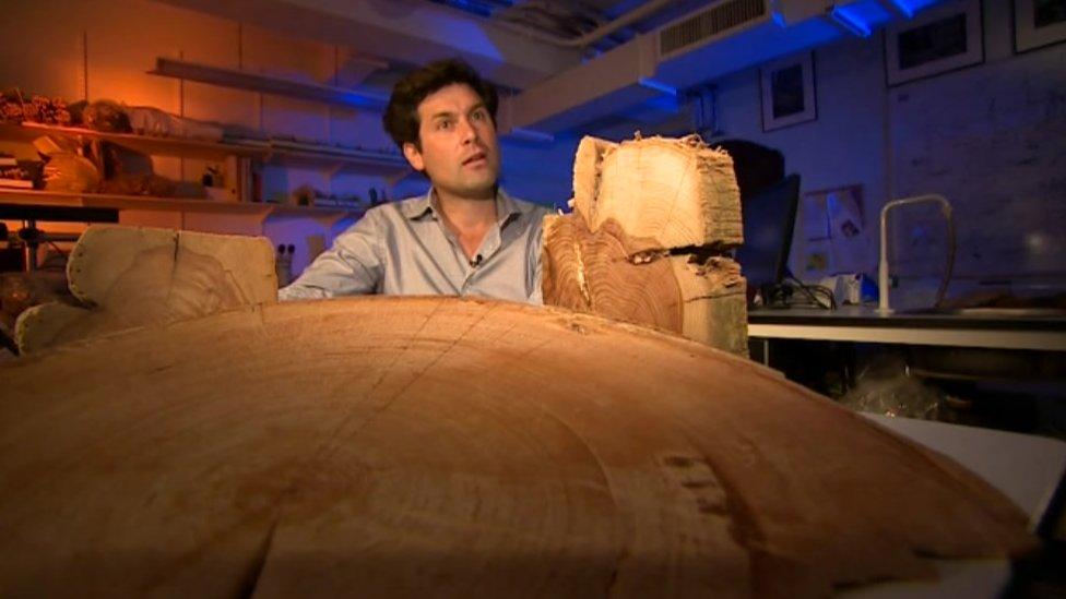 Cambridge University scientists create ancient tree ring diary