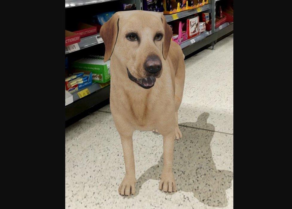 dog in supermarket