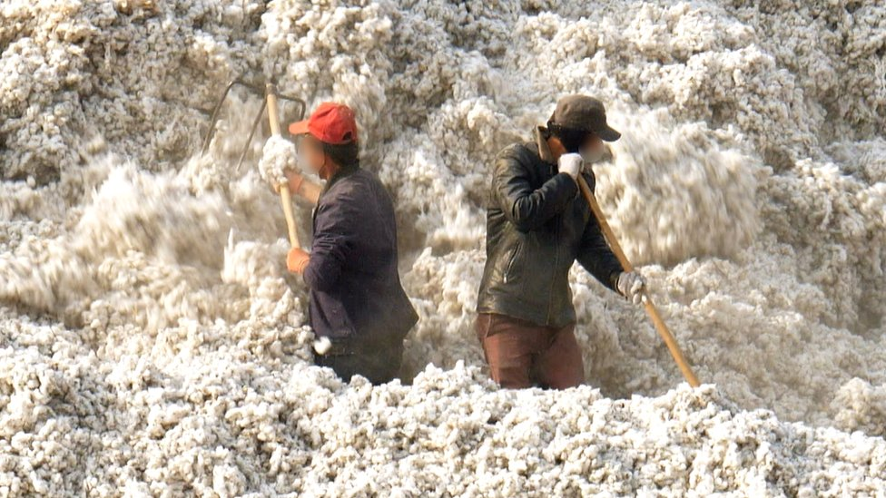 Workers in a cotton field in Xinjiang