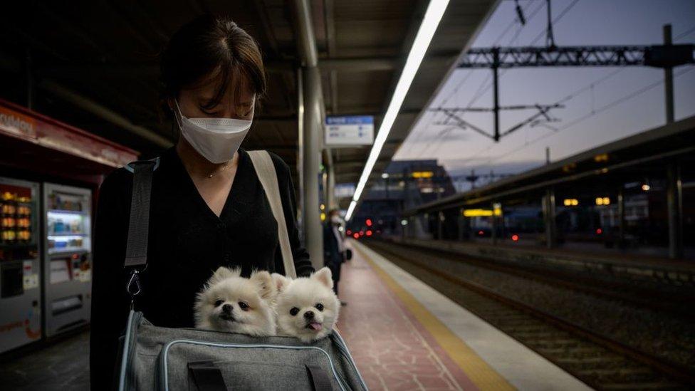 Mujer esperando un tren con dos perros