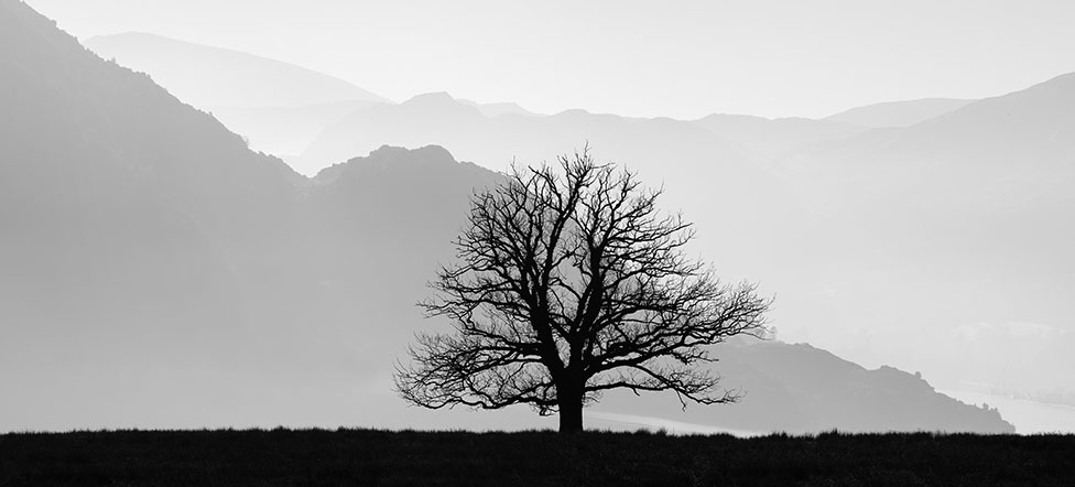 A lone tree silhouetted against mountains
