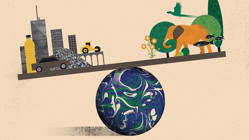 Ilustración sobre el peso de la biomasa