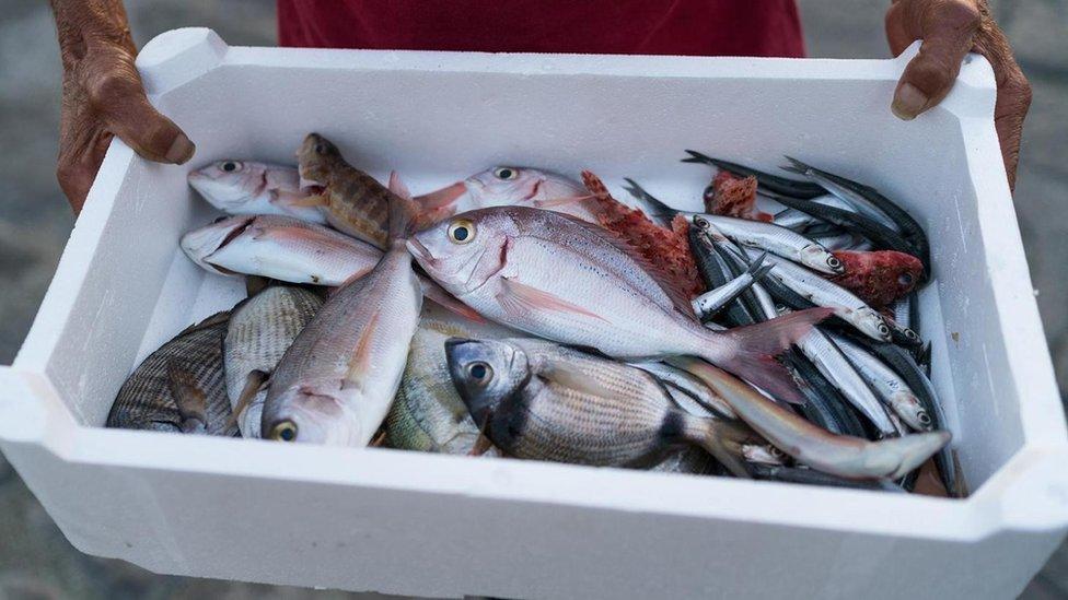 Una bandeja con pescado
