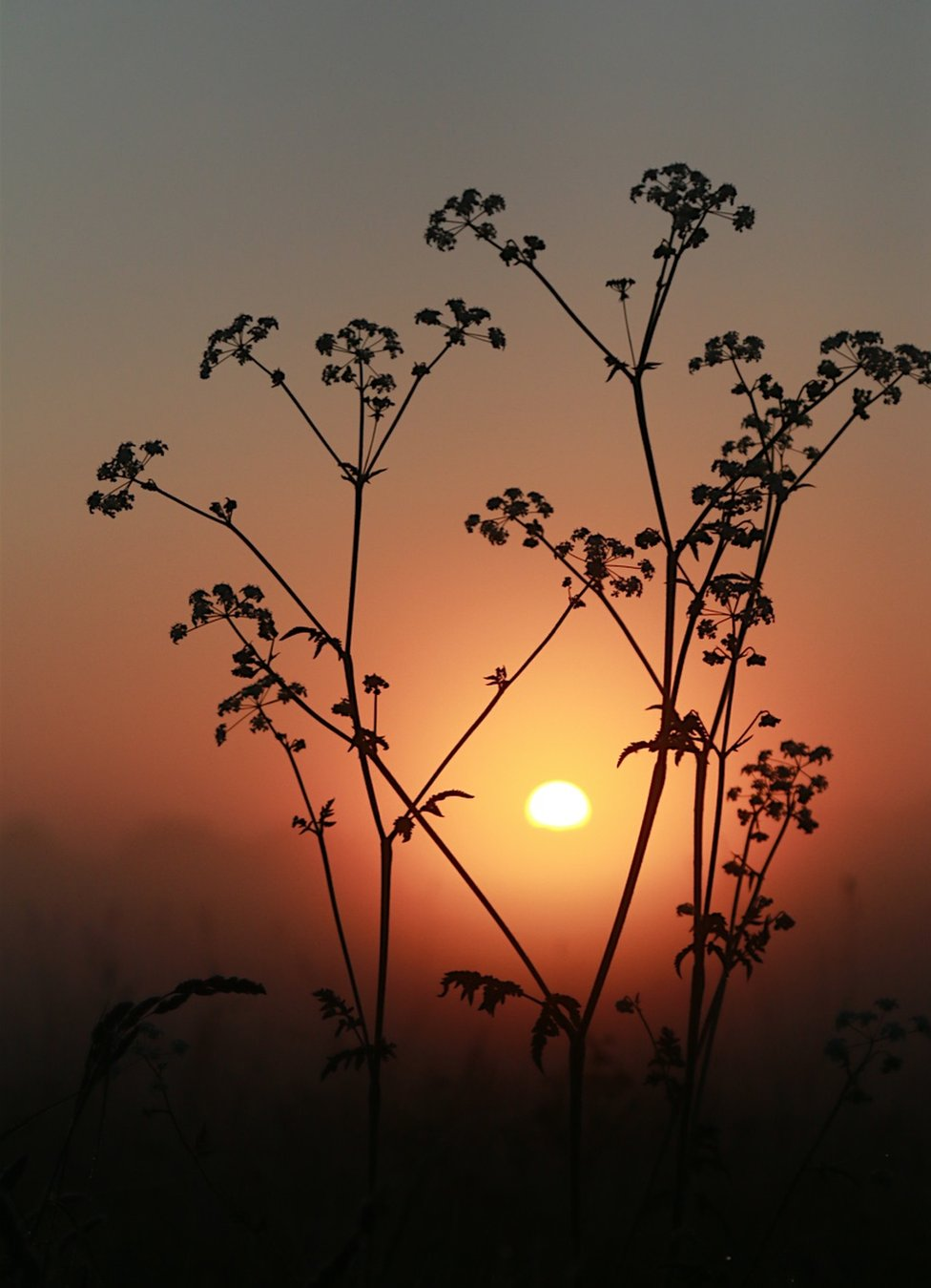 A silhouette of a plant against the sunset