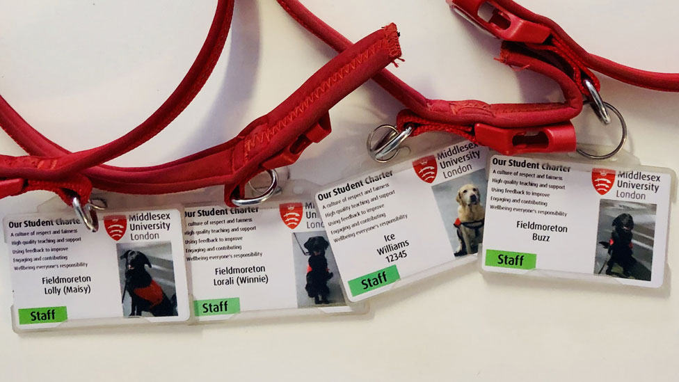 Dog badges