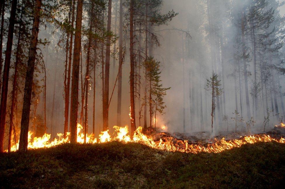 Incendio descontrolado en Karbole, Suecia, 15 de julio de 2018