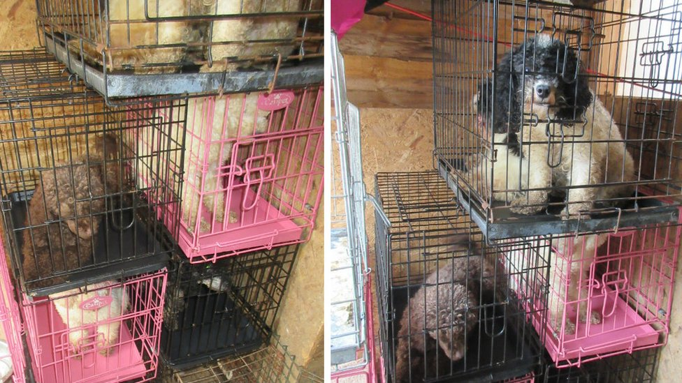 Cats and dogs kept caged at Slough woman's home