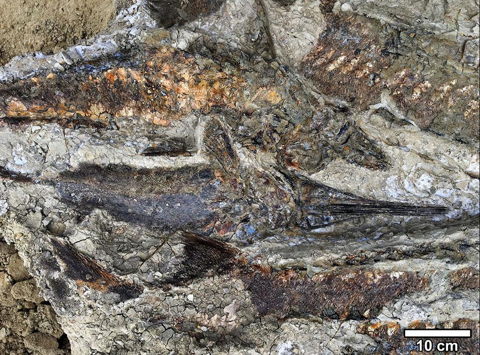 Fosil ikan
