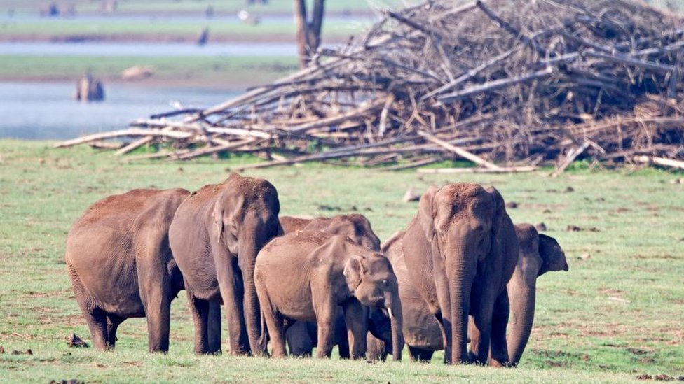 Elephants in Nagarhole national park in Southern India
