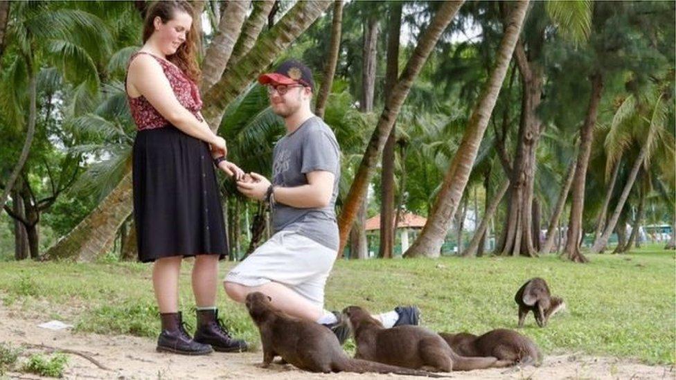Як видри допомогли британцю освідчитися коханій в Сингапурі