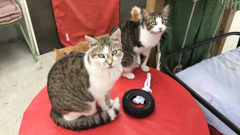 Image shows cats at the animal shelter in Toulouse