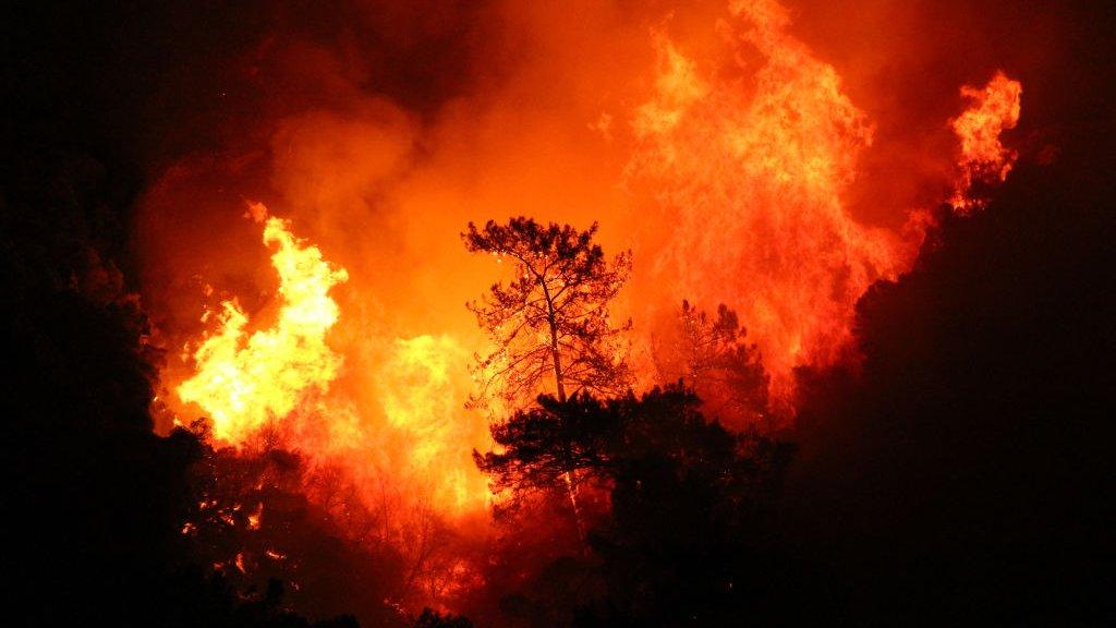 Леса горят, как спички. Аномальная жара на юге Европы создала идеальные условия для пожаров