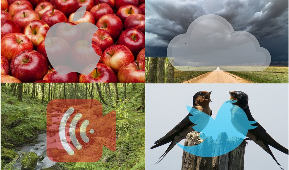 Apple, cloud, stream and tweet images