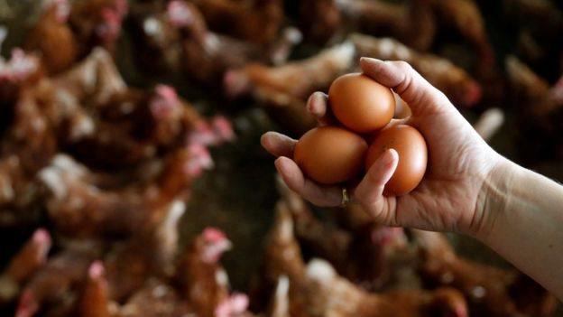 zehirli yumurta skandalı