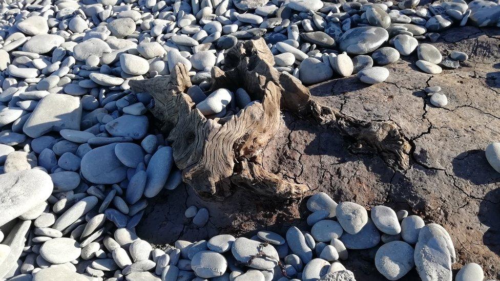 Uncovered tree stump on Llanrhystud beach