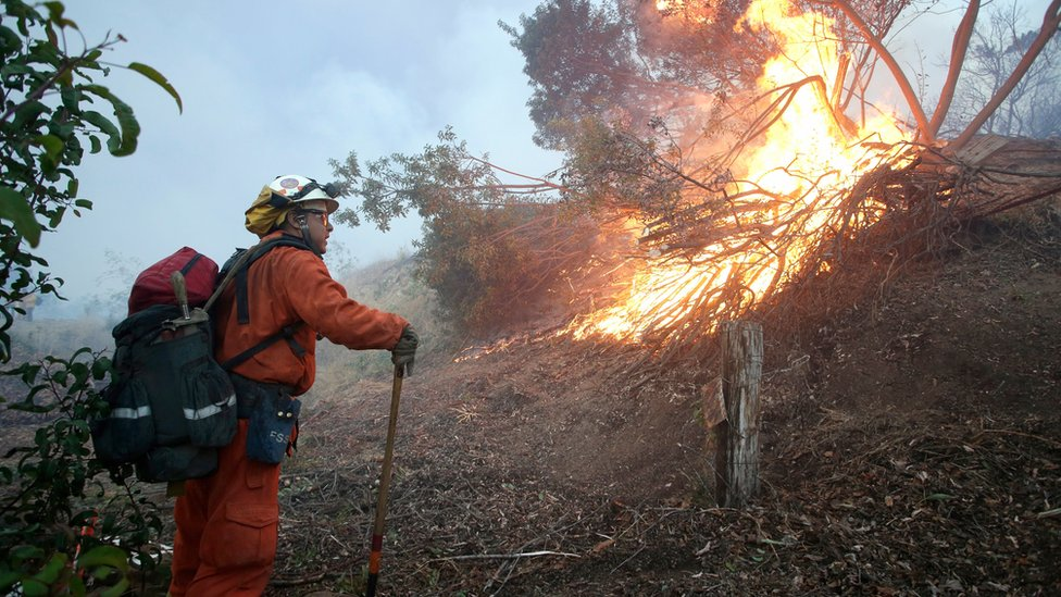 "An inmate firefighter fights a fire in avocado orchard at the Ojai Vista Farm threatened by the ""Thomas Fire"" near Ojai, California, USA, 07 December 2017."