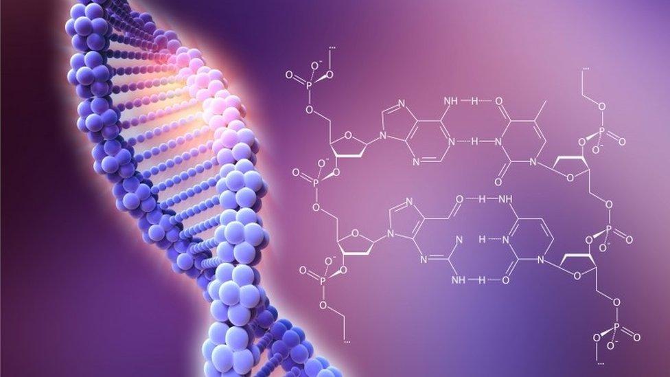 Una ilustración de un ADN y su estructura