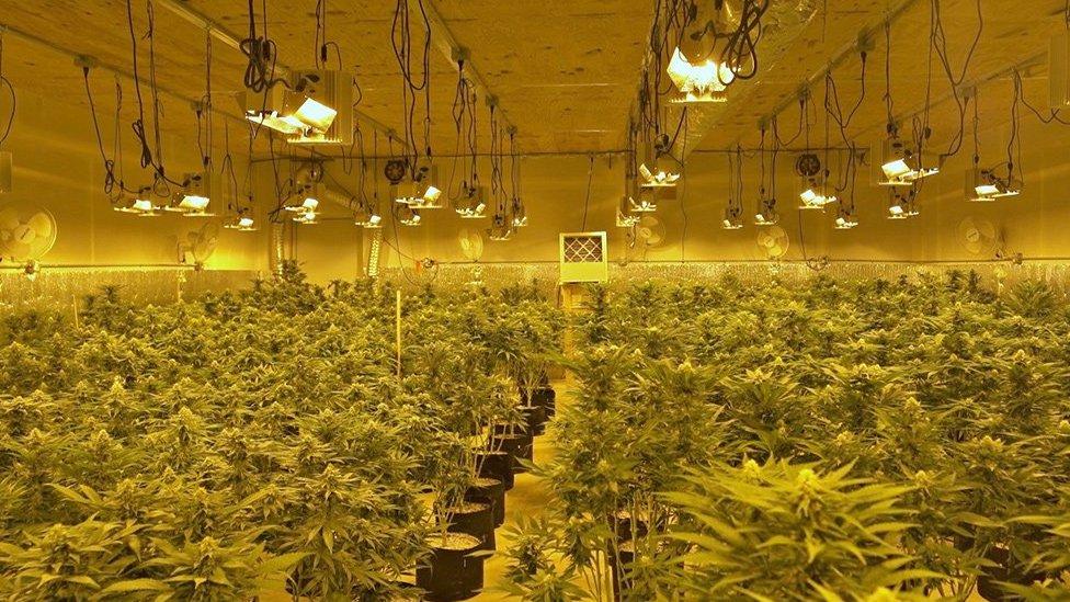 Andy's marijuana farm in Oklahoma