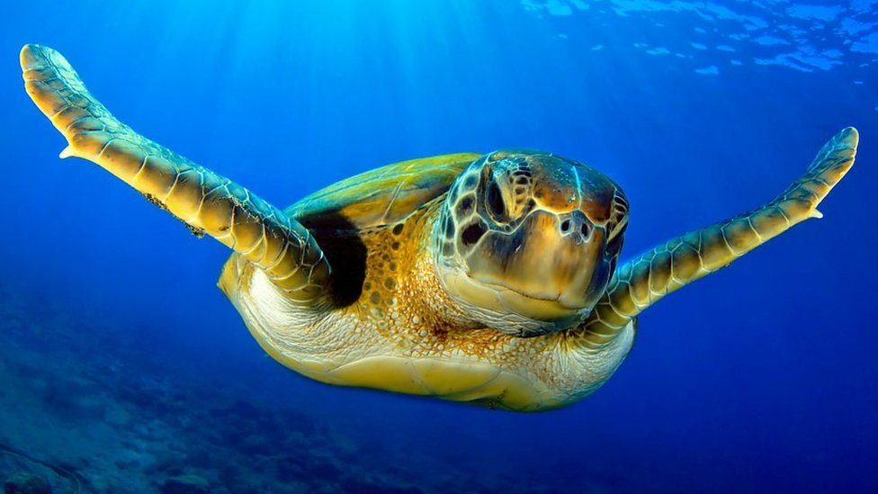 Turtle meat - the ultimate survival diet?