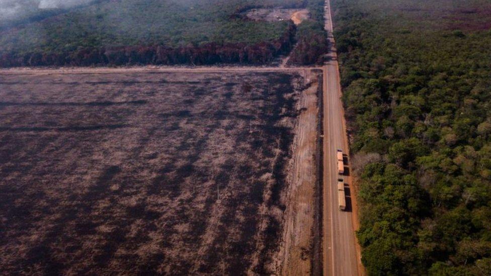 تتناول الدراسة أسباب فقدان الأشجار بما في ذلك الاضطرابات الطبيعية