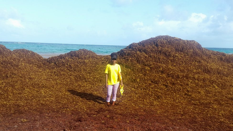 Carla Daniel standing amid a mountain of sargassum on 8 June, Falmouth Beach, Barbados