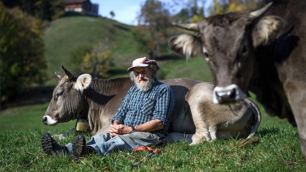 Farmer Armin Kapaul zahteva zabranu skidanja rogova kravama