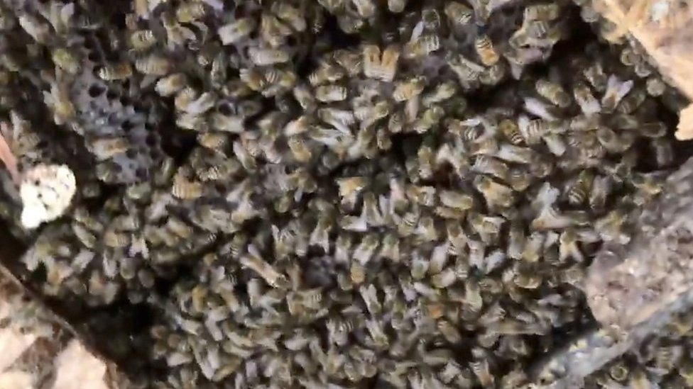 60,000 bees found in hospital roof