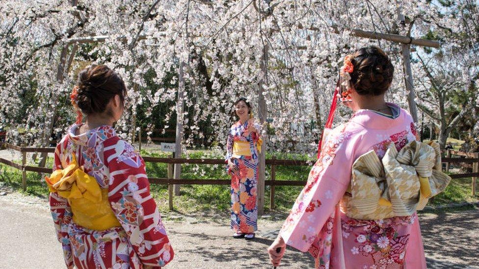 Musim bunga sakura