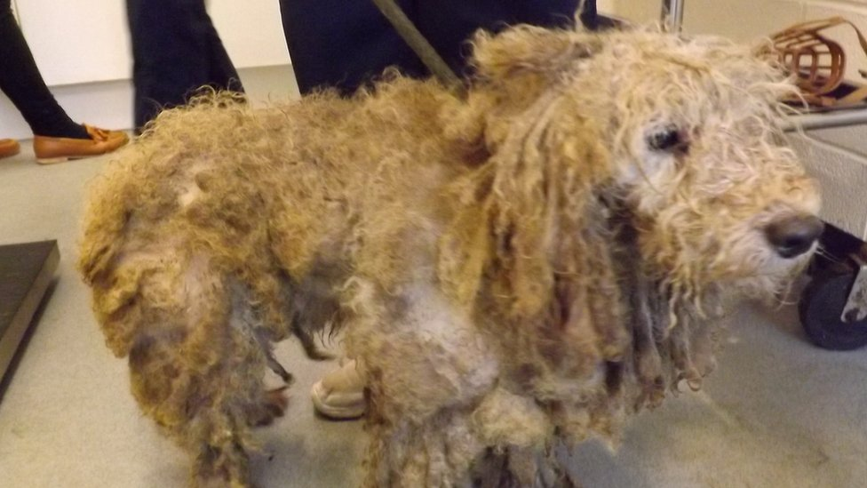 Dogs dumped in Leicestershire and Norfolk 'may be linked'