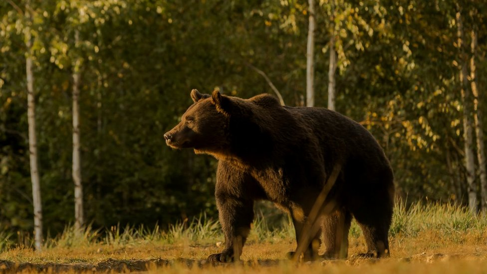 Picture of Arthur the brown bear