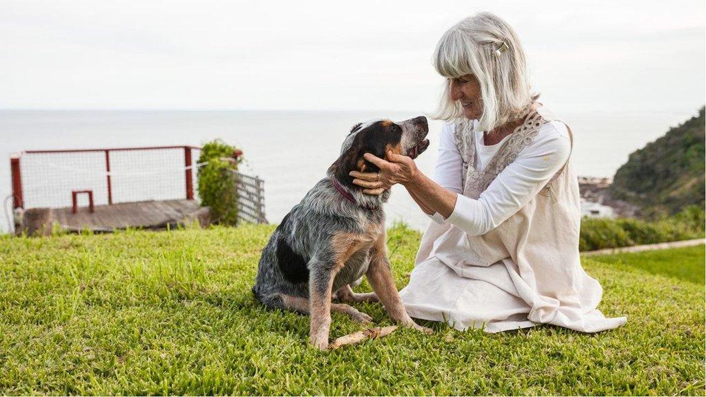 對狗的壽命的新研究認為,寵物犬進入犬類中年期的時候遠比其大多數狗主人所想的要快得多。