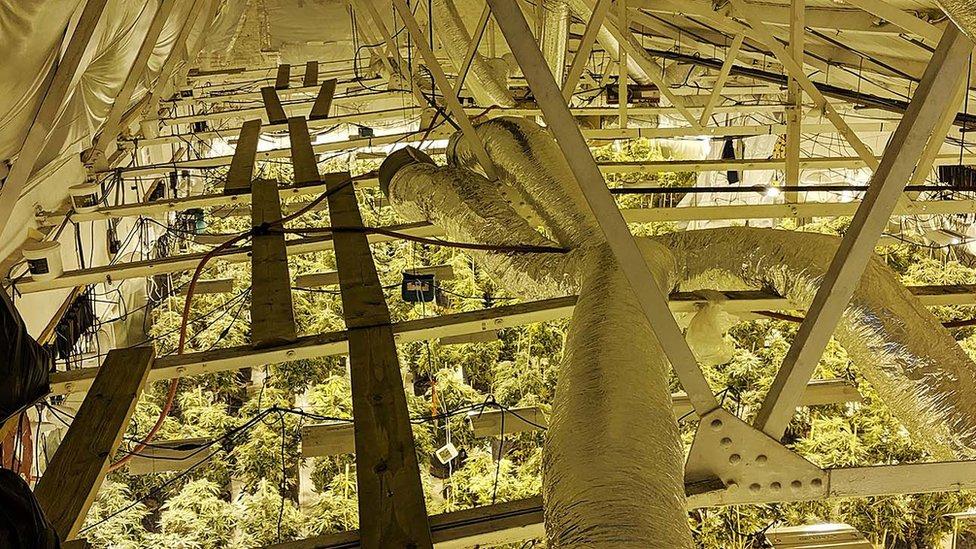 Cannabis worth £1m seized in Watford by police