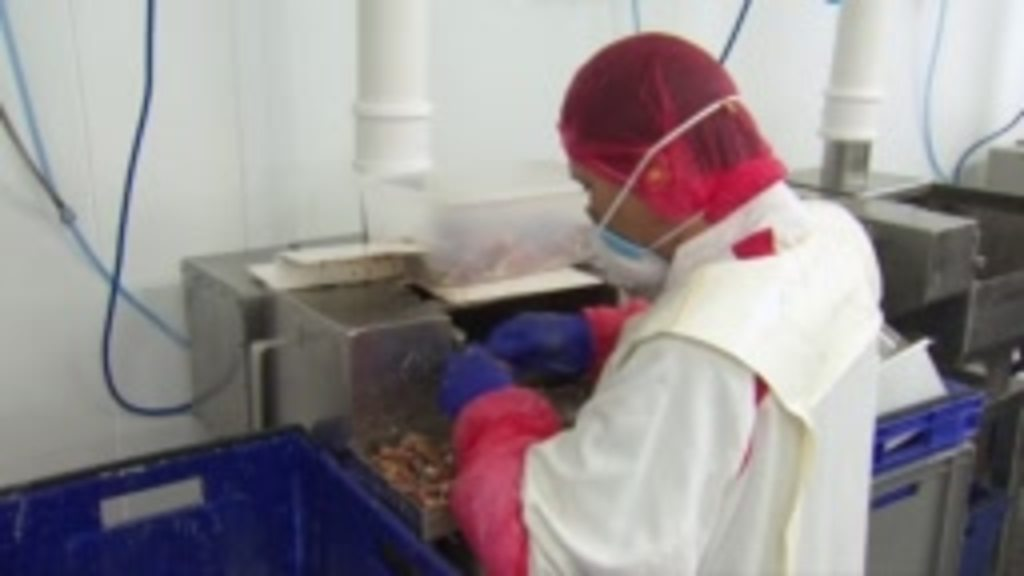 Migrant workers: 'You don't want us any more in the UK'