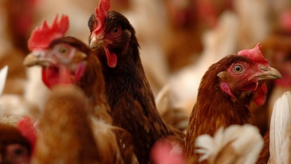 How unsafe is India's bird flu amid the pandemic?