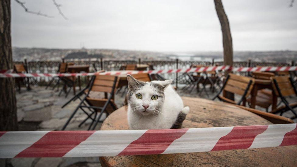 BBC Türkçe'nin ulaştığı Ankara'da bir veteriner hekim, meslek odası tarafından kendilerine gönderilen mesajdan sonra durumu ağır hayvanlara yapılması gereken ameliyatların akıbeti açısından kaygı duyduklarını ifade ediyor