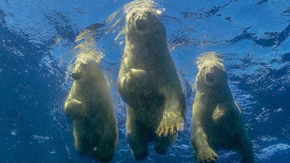 3 osos