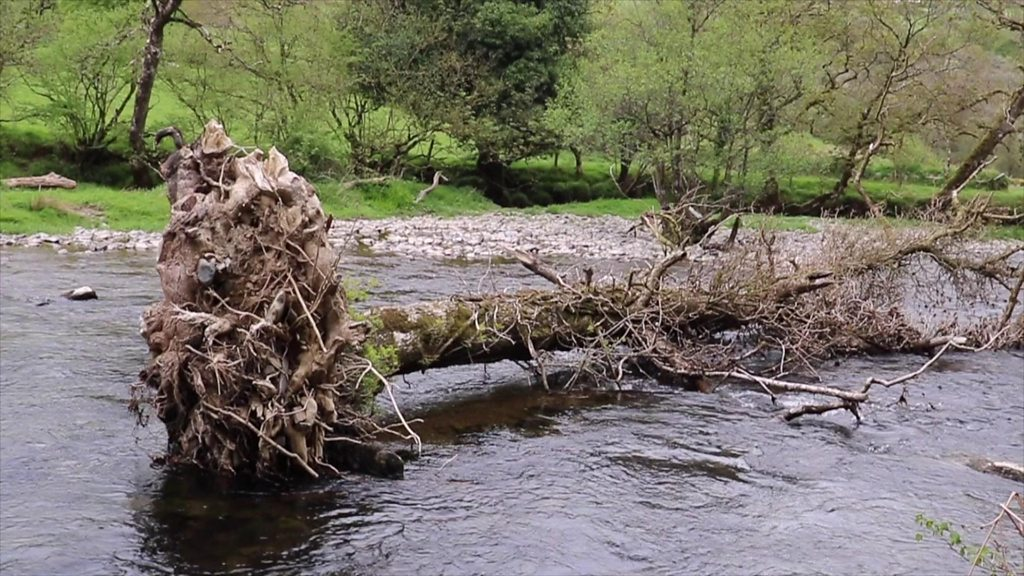 Exmoor National Park in plea to keep rivers debris free