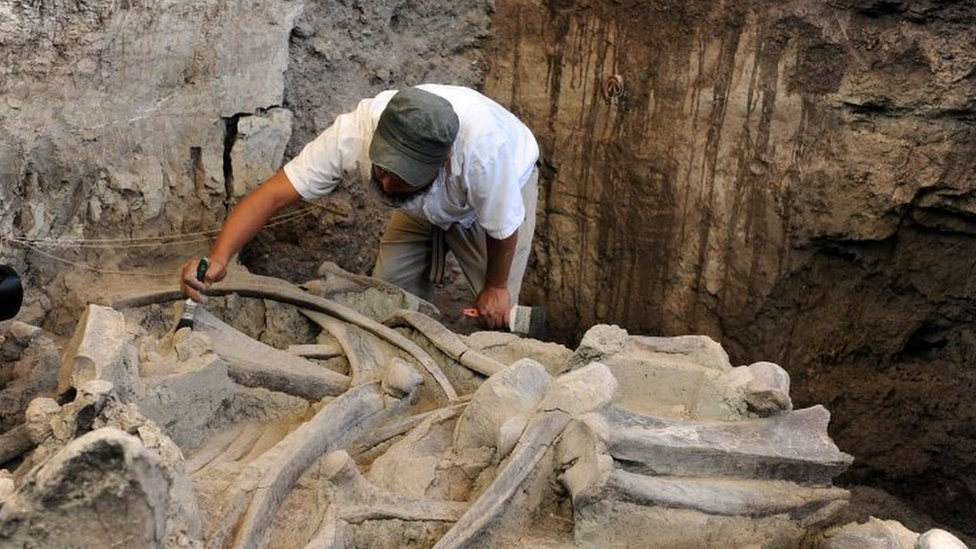 Fossilized bones of a mammoth at the excavation site in Tultepec, Mexico, May 17, 2016