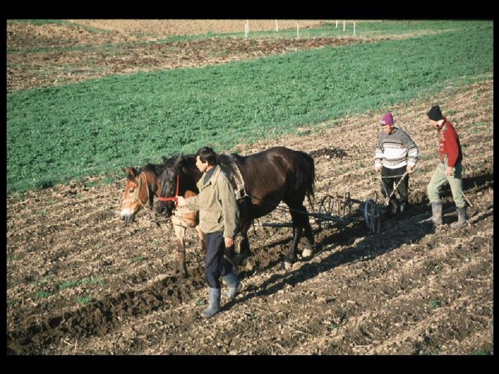 radnici u polju