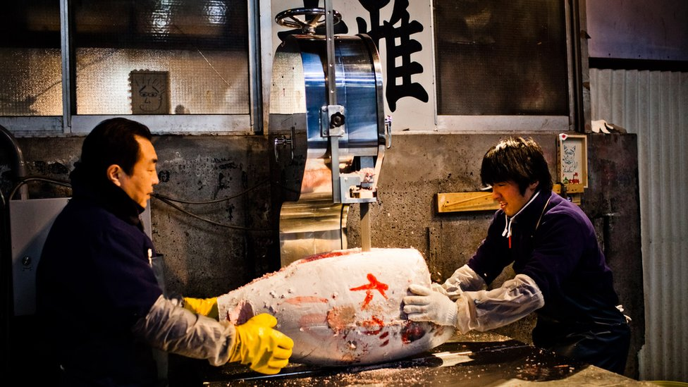 Workers cut a large frozen tuna