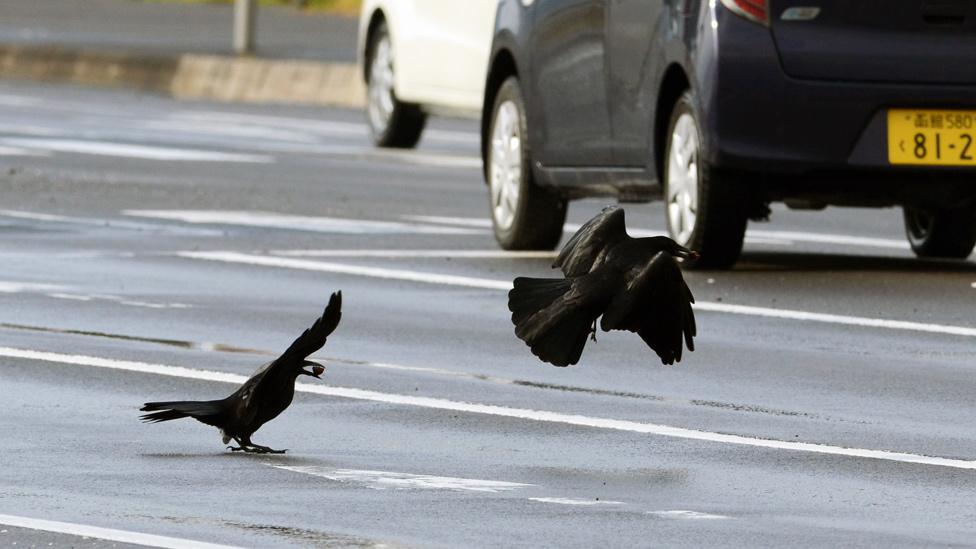 Cuervos de Sendai