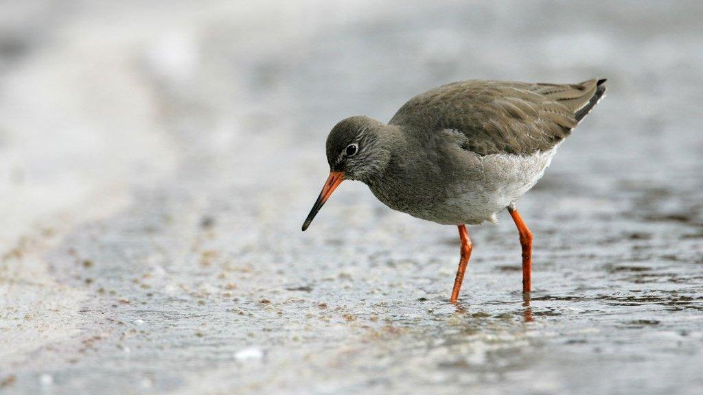 Crossrail-spoil wetland provides haven for wildlife