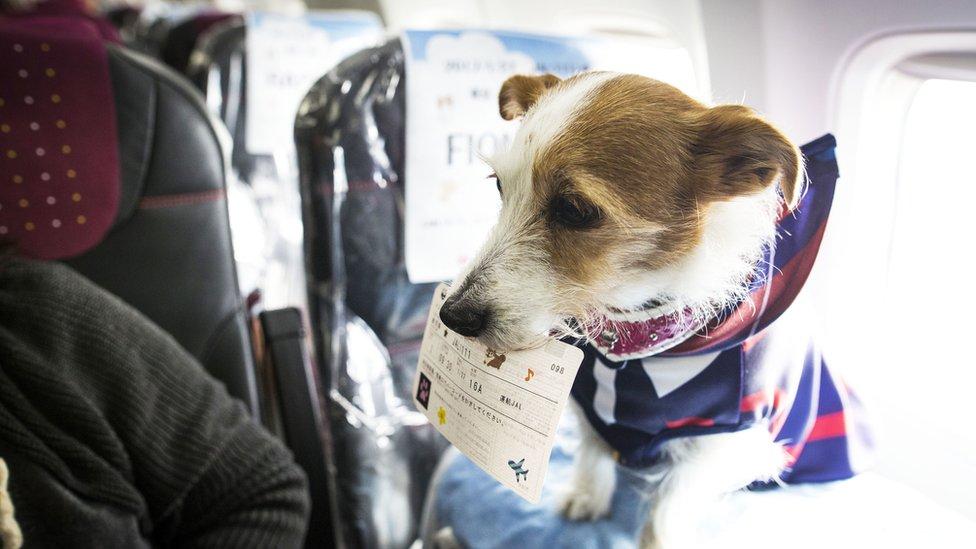 Pas u zubima drži bording kartu