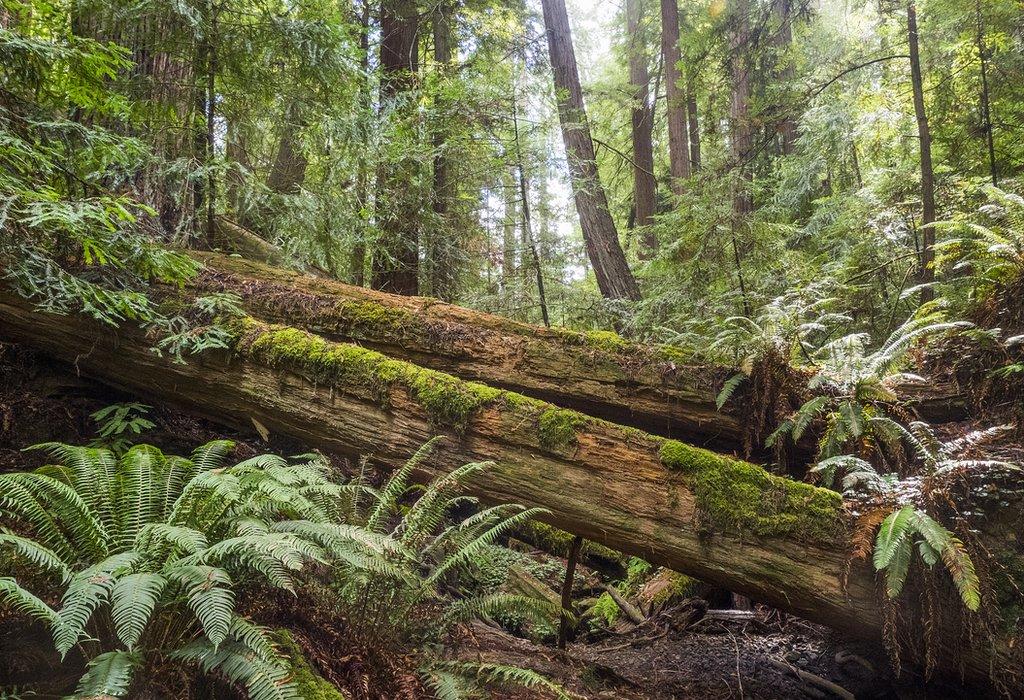 Árvore caída em floresta