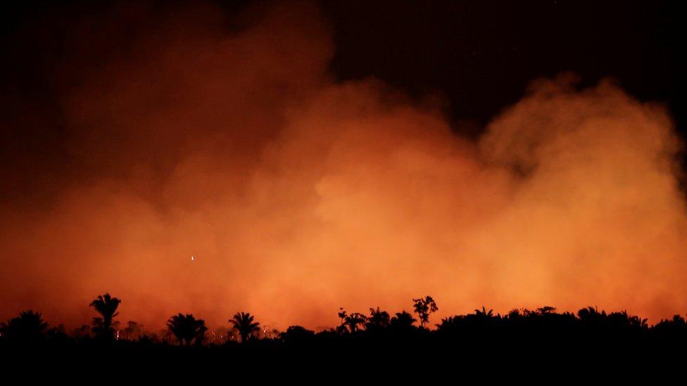 Kebakaran hutan di Amazon