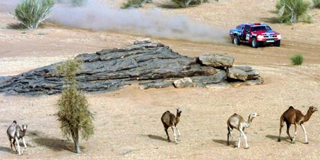 Competitor on the Paris-Dakar rally